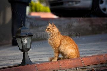 Istanbul  Tuerkei  eine Katze auf der Strasse