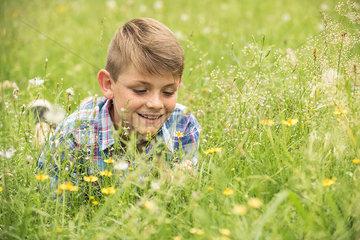 Boy lying in meadow  picking flowers