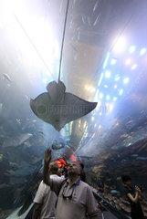 Dubai  Vereinigte Arabische Emirate  Mann betrachtet einen Rochen im Dubai Aquarium