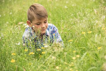 Boy lying down in meadow  picking flowers