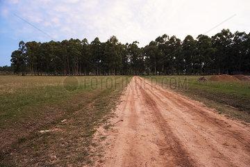 Dirt road in rural landscape