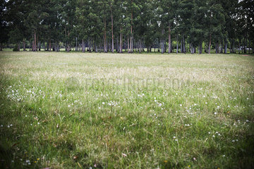 Grassy field with woods in distance