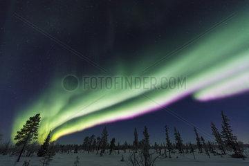 Nordlicht (Aurora borealis)  Lappland