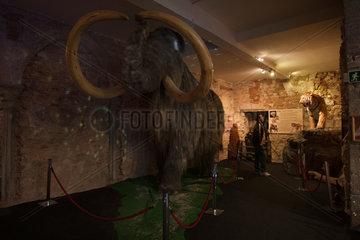 Barcelona  Spanien  Mammut-Rekonstruktion im Museo del Mamut de Barcelona