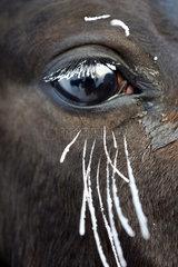 Graditz  Deutschland  Auge eines Pferdes im Winter mit vereisten Wimpern und Tasthaaren