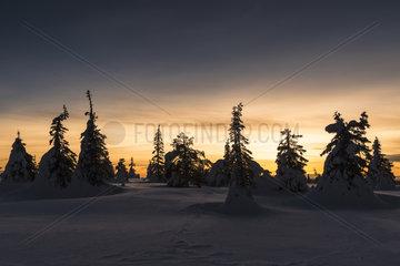 Abendstimmung  Riisitunturi Nationalpark  Lappland