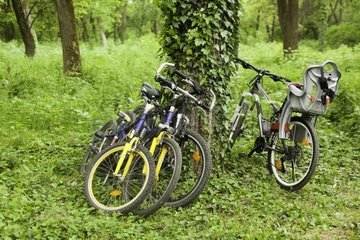 Bicycles near a tree