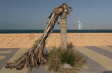 Dubai  Vereinigte Arabische Emirate  abgeknickte Palme vor dem Burj al Arab