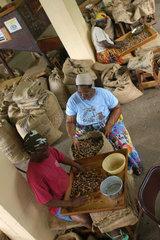 St. Georges  Grenada  Mitarbeiter in einer Muskatnussfabrik