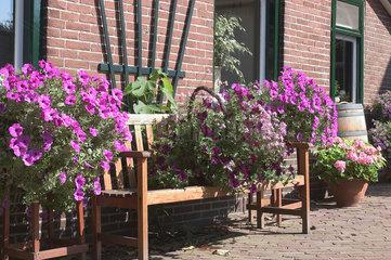 De Waal  Niederlande  prachtvolle Blumen vor einem Wohnhaus in De Waal