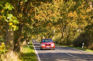 Putbus  Deutschland  Autos auf der Deutschen Alleenstrasse