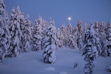 Aekaeskero  Finnland  Winterlandschaft bei Mondschein