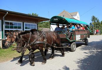 Insel Hiddensee  Deutschland  Pferdefuhrwerk im Inselort Vitte