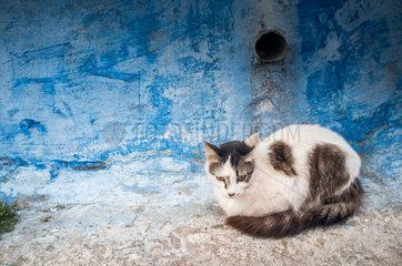 Rabat  Marokko  eine Strassenkatze ruht sich aus