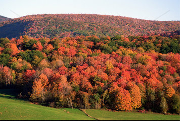 Williamstown  USA  Farbenpracht zum Indian Summer im Berkshire County