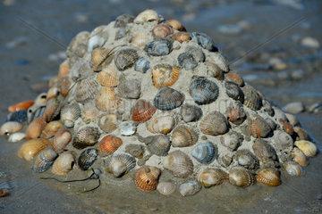 Baltrum  Deutschland  Muscheln auf einem Sandhaufen am Strand