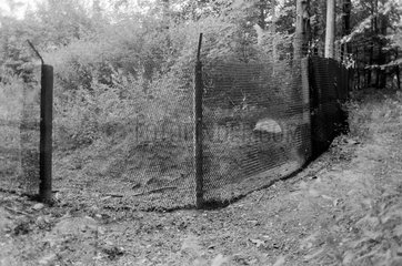 Zarrentin  DDR  Grenzzaun im Wald