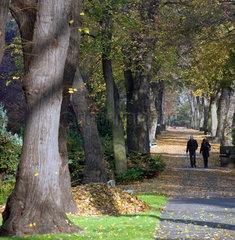 Berlin  Deutschland  Hauptallee auf dem Urnenfriedhof Seestrasse
