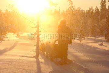 Aekaeskero  Finnland  Mann macht eine Fahrt auf einem Hundeschlitten