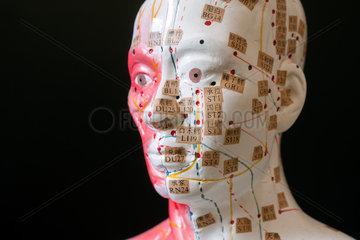 Genua  Italien  medizinische Modell-Puppe