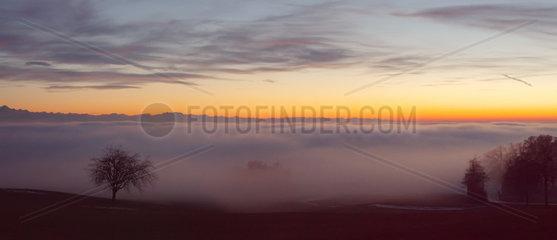 Baum mit Ausblick ueber das Nebelmeer am Bodensee