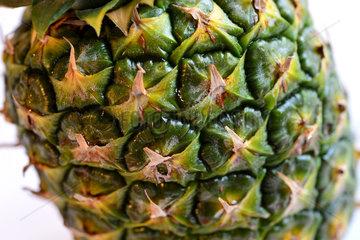 Hannover  Deutschland  Detailaufnahme einer Ananas