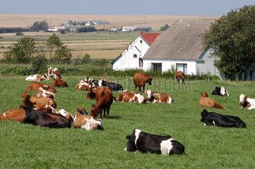 Aalborg  Daenemark  Landwirtschaft auf der Halbinsel Himmerland