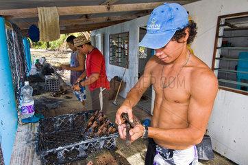 Fakarava  Franzoesisch-Polynesien  Arbeiter auf einer Perlenfarm