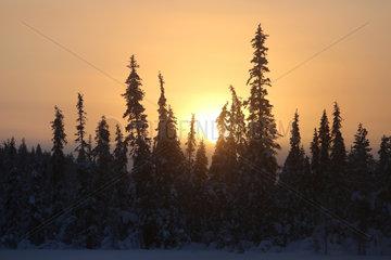 Aekaeskero  Finnland  Schneelandschaft bei Sonnenaufgang