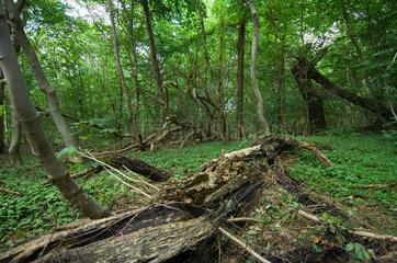 Lauterbach  Deutschland  Naturschutzgebiet Insel Vilm
