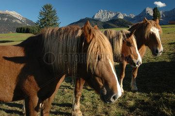 Mittenwald  Deutschland  Pferde auf einer Weide