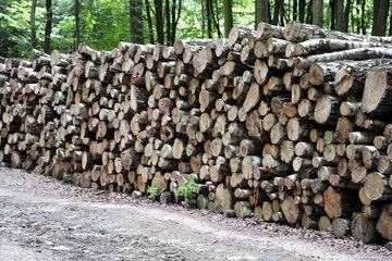Binz  Deutschland  gestapelte Baumstaemme im Waldgebiet Granitz auf Ruegen