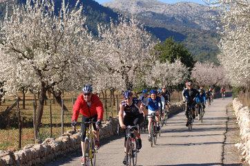Alaro  Spanien  Mandelbluete und Fahrradfahrer auf Mallorca