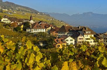 Winzerdorf Rivaz in den Weinbergen des Lavaux  Waadt  Schweiz