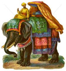 Elefantenreiten  Indien  1890