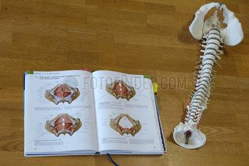 Berlin  Deutschland  Modell einer Wirbelsaeule und aufgeschlagenes Anatomiebuch