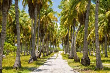 Avatoru  Franzoesisch-Polynesien  Palmenallee auf dem Rangiroa-Atoll