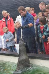 De Koog  Niederlande  Fuetterung von Seehunden im EcoMare