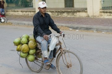 Fahrradfahrer transportiert Kokosnuesse / Siem Reap / Kambodscha / SUEDOSTA