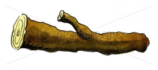 Brennholz Holzscheit