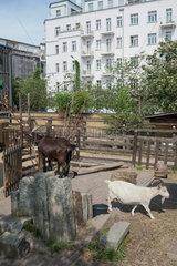 Berlin  Deutschland  Tiere auf der Jugendfarm Moritzhof