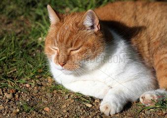 Berlin  Deutschland  Hauskatze schlaeft in der Sonne