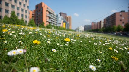 Berlin  Deutschland  Blumenwiese im Tilla Durieux-Park