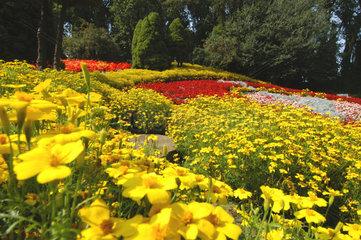 Nykoebing Mors  Daenemark  Blumen im Blumen- und Freizeitpark Jesperhus