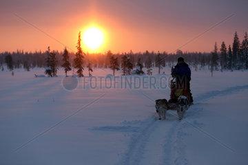 Aekaeskero  Finnland  Frau macht eine Fahrt auf einem Hundeschlitten