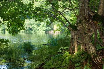 Sassnitz  Deutschland  Landschaft am Herthasee