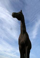 Neustadt (Dosse)  Deutschland  Froschperspektive  Pferd schaut aufmerksam