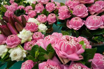 Bangkok  Thailand  Verkauf von Blumen auf einem Blumenmarkt