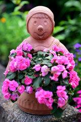 Oldenburg  Deutschland  Blumen in einer Gartenanlage in Oldenburg