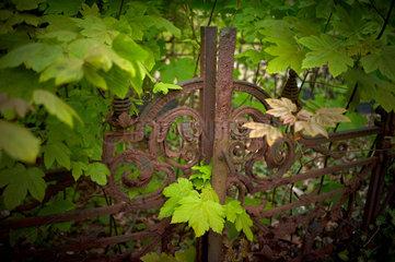 Berlin  Deutschland  auf dem alten Domfriedhof der St. Hedwigsgemeinde